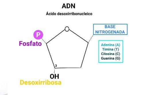Bioelementos y biomoleculas. Biologia selectividad.